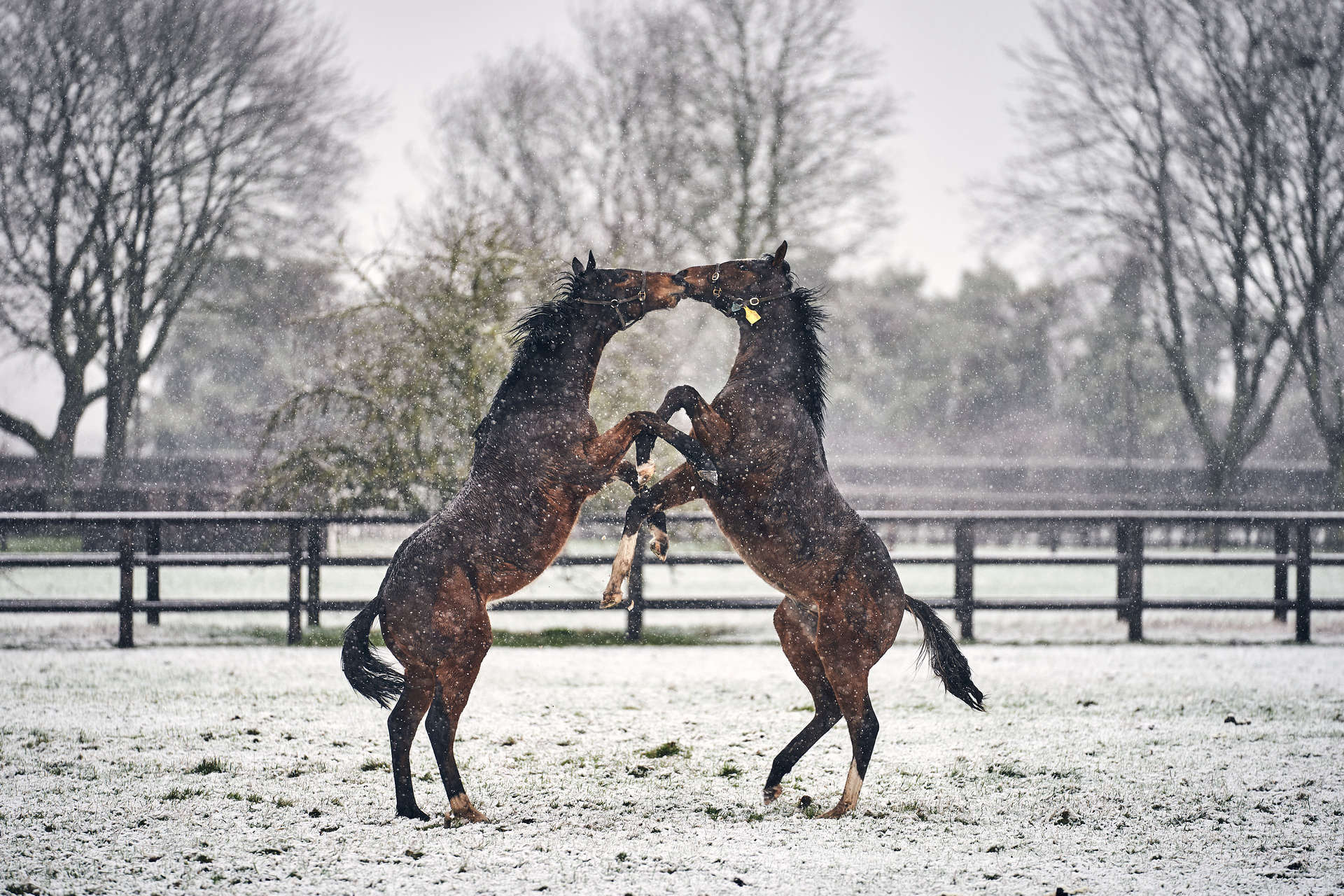 Two horses being affectionate with one another