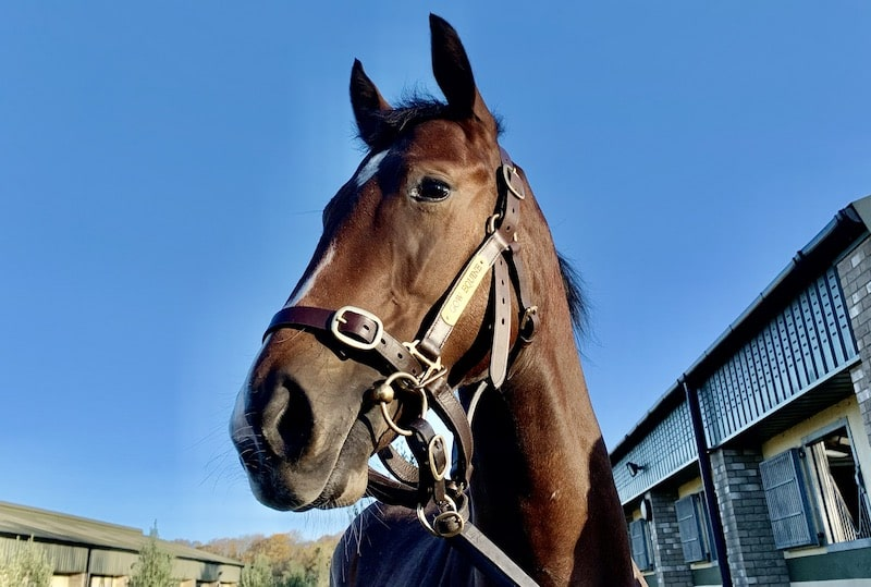 Racehorse Lotto Christmas Raffle filly