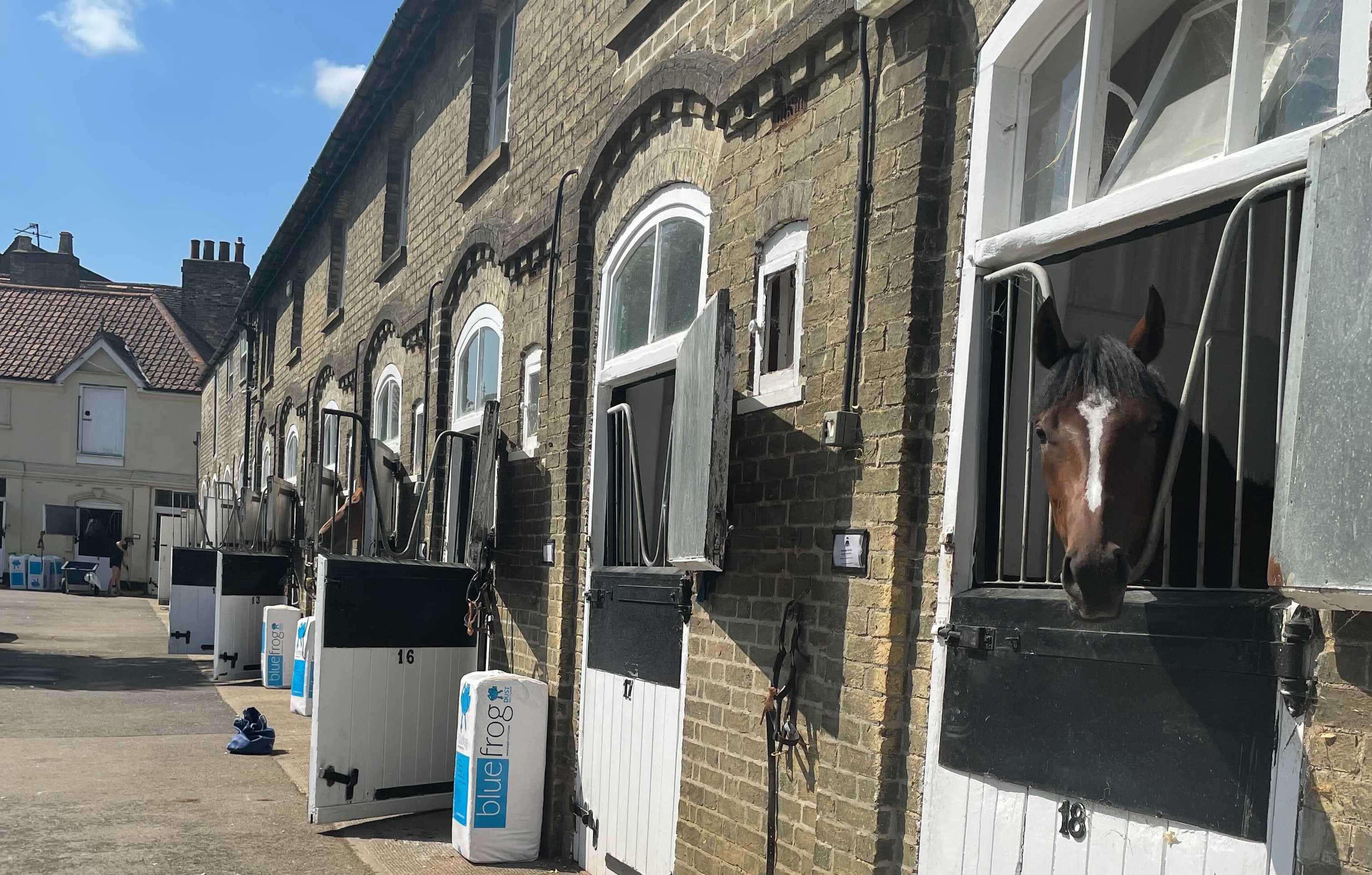 Horse yard James Ferguson Newmarket Horseracing Stables