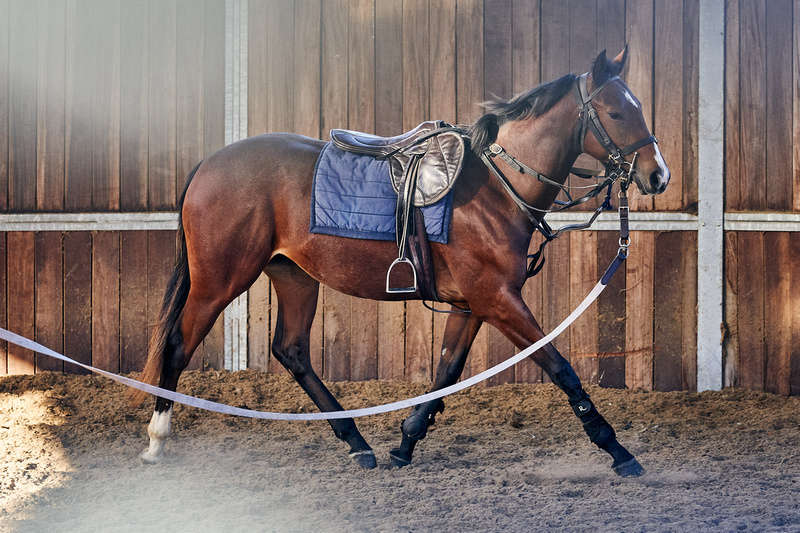 The Racehorse Lotto Christmas Raffle Filly during the lunging and long-reining process (image by Dominic James)
