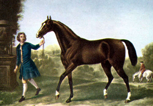 The Darley Arabian (foaled c.1700) painted by John Wootton